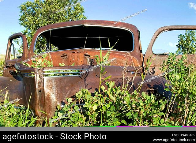 Overgrown Antique Car