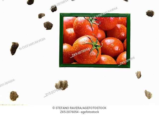 Tomatoes framed photo in a wall - Playa Blanca, Lanzarote - Canary Islands