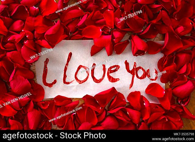 The text I love you surrounded with red rose petals, romantic concept top view valentines background beauty