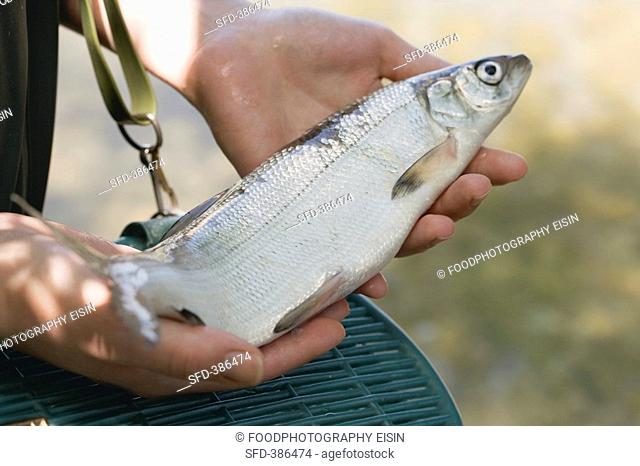 Hands holding freshly caught fish