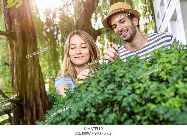 Young couple pruning bush in garden