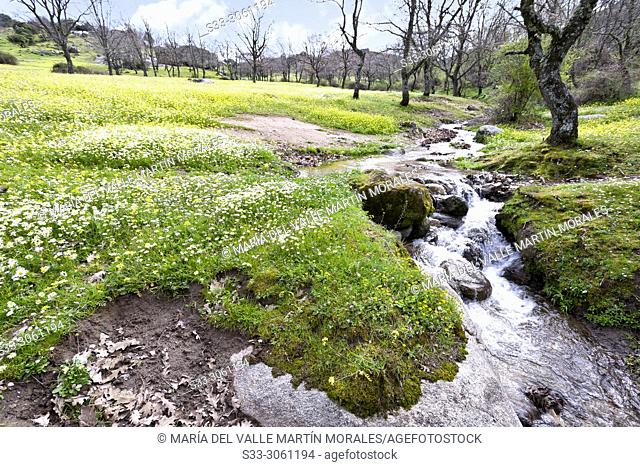 Stream in the meadows at Higueras de las Dueñas. Avila. Spain