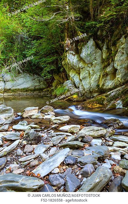 Selva de Irati, Navarra, Spain, Europe