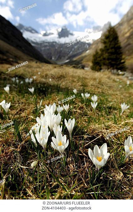 Europa, Schweiz, Zentralschweiz, Gotthard, Sustenpass, Meiental,  (Urs Flueeler)