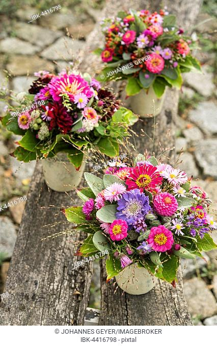 Three small autumn bouquets with Zinnia (Zinnia elegance), Aromatic Aster (Aster novae), Quaking grass (Briza), sage (Salvia), wine leaves (Parthenocissus)