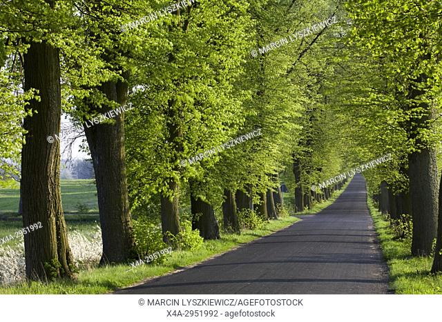 Country Road in Spring, Kujawy, Poland