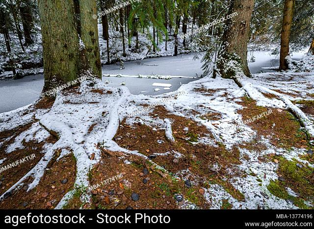 Pond in the forest, Wernloch in winter, Middle Franconia, Bavaria