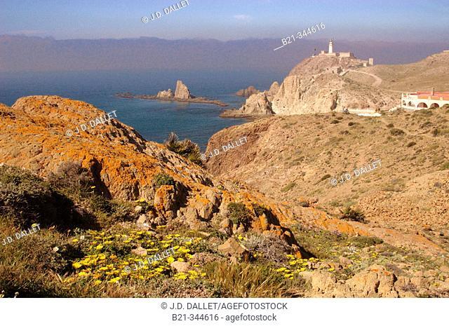 Cabo de Gata, Reserva de la Biosfera Cabo de Gata-Níjar. Almería province, Spain