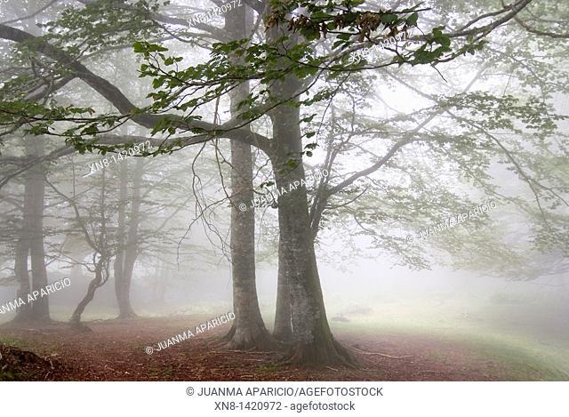 Irati jungle shrouded in dense fog