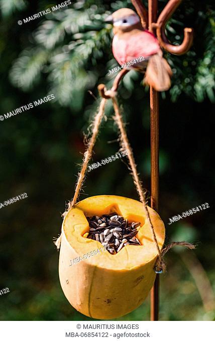 DIY, bird feeder, pumpkin, hang