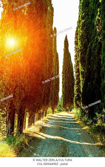 Rural road lined with cypress trees, Tuscany, Italy