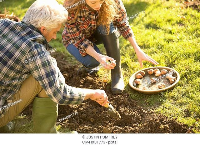 Couple gardening digging planting bulbs in sunny autumn garden