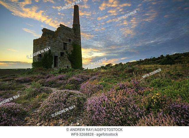 Heather and gorse at Tywarnhayle Engine House