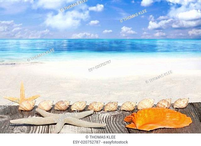 Muscheln und Seester liegen auf Holzsteg am Sandstrand