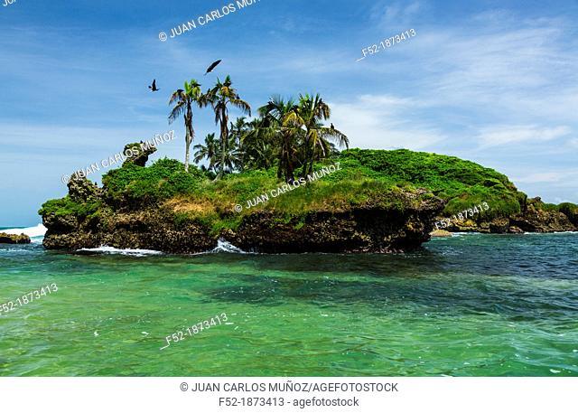 Magnificent Frigatebird Fregata magnificens, Birds Island, Bocas del Toro Archipelago, Bocas del Toro Province, Panama, Central America, America