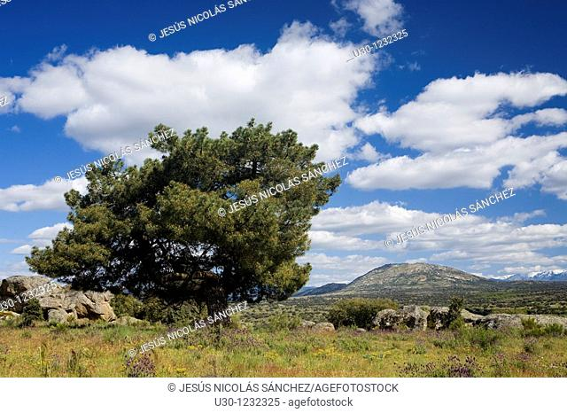 Overview of Cerro Del Berrueco, archaeological site in the Salamanca province, next to a small town called El Tejado, belonging to Puente Del Congosto...