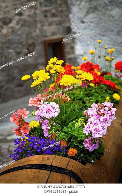 Colourful, blossoming flowers potted in a wooden planter with a stone wall in the background along ancient cobblestone streets of Dolonne