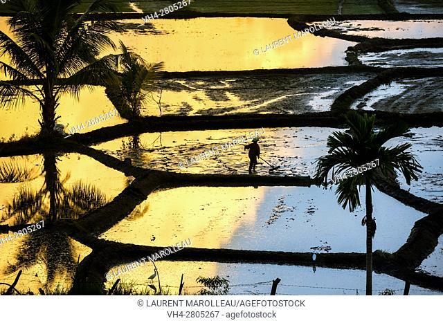 Farmer working in paddy fields at sunset. Polonnaruwa, North Central Province, Sri Lanka, Asia