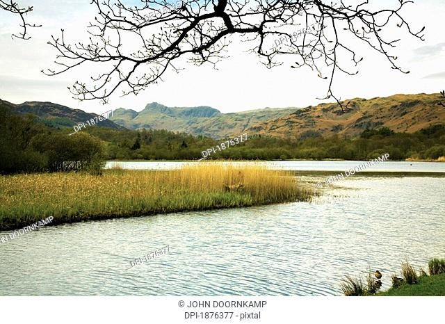 Elterwater, Cumbria, England, Reeds Along The Shoreline Surrounded By Mountains