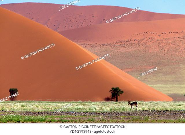 Beautifull colours in the desert after the rain, Namib-Naukluft National Park, namib desert, Namibia