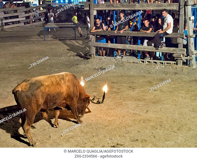 Bou Embolat traditional Catalan activity (bull with balls of flammable material attached to its horns) during Poble Nou del Delta village Major Festivity