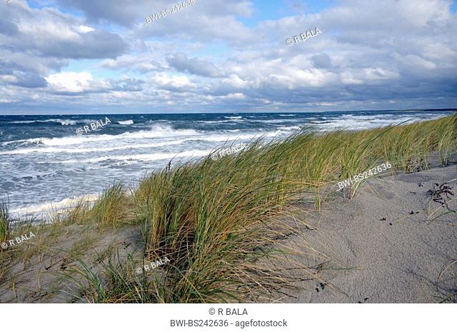 view over a dune at the open sea, Germany, Mecklenburg Vorpommern, Western Pomerania Lagoon Area National Park