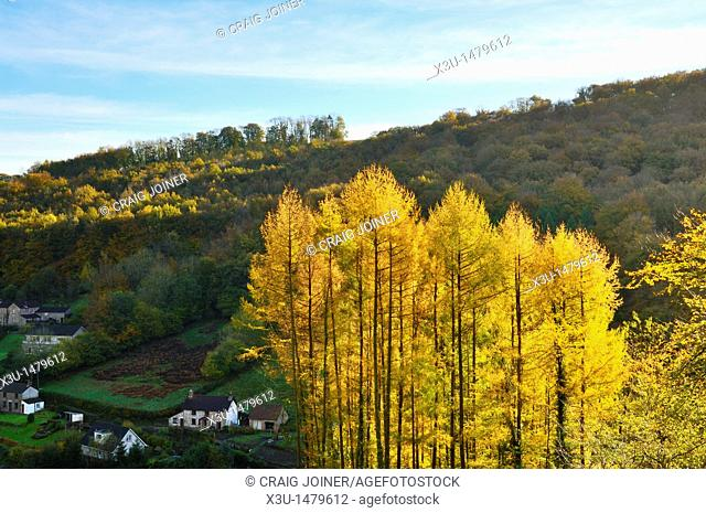Autumn colours at Barbadoes Hill, Tintern in the Wye Valley Monmouthshire, Wales, United Kingdom