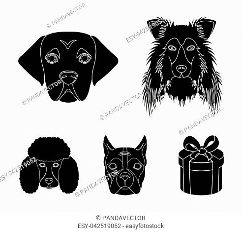 Muzzle of different breeds of dogs.Collie breed dog, lobladore, poodle, boxer set collection icons in black style vector symbol stock illustration