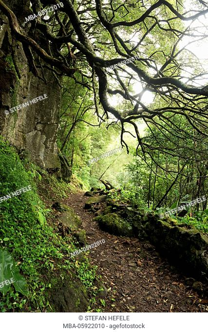 Path to the waterfalls Salto do Prego, Sao Miguel, the Azores, Portugal