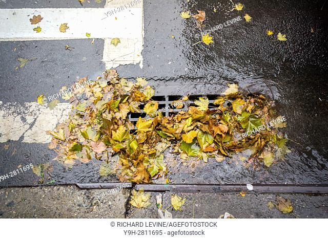A partially clogged storm drain, filled with the remains of colorful fall foliage, in the Chelsea neighborhood of New York