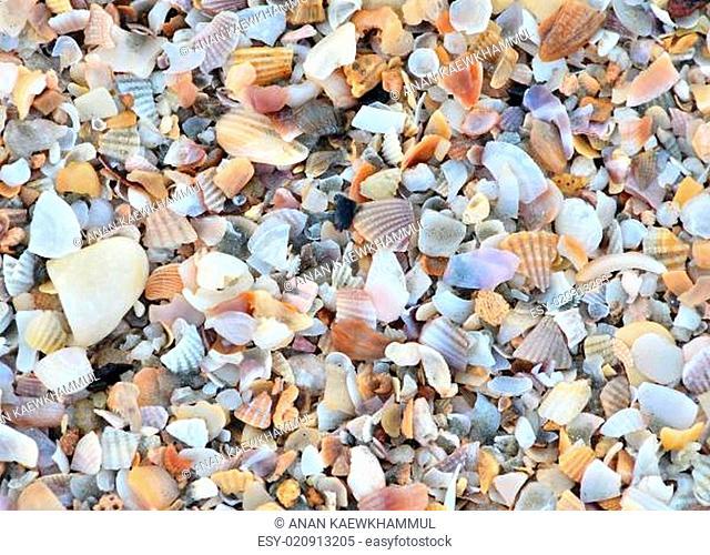 variety of broken seashells