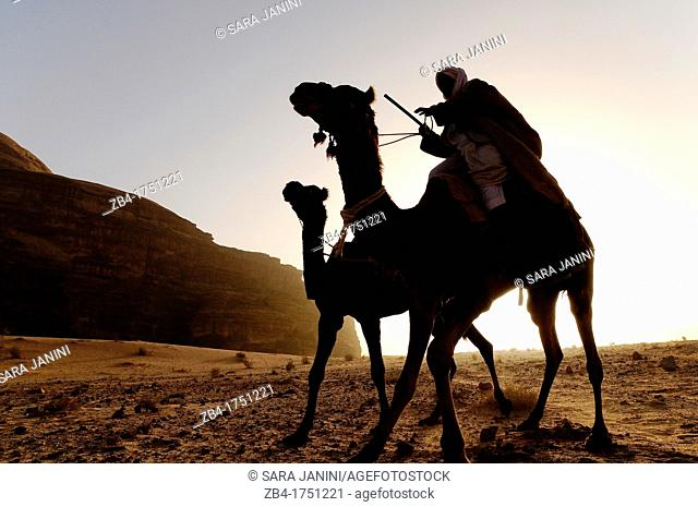 A beduin man with his camels, Wadi Rum desert, Jordan, Middle East