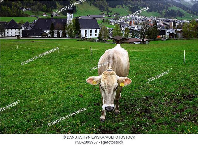 Engelberg - resort town in Obwalden canton, in front Swiss cow, in background famous Benedictine monastery and Engelberg city, Switzerland, Europe