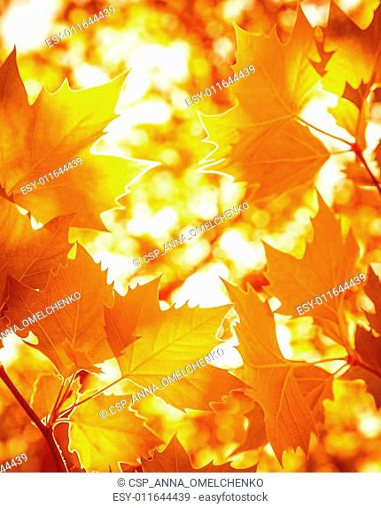 Abstract foliage background