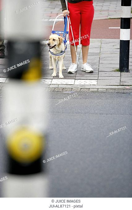 Blind woman and seeing eye dog waiting to cross street