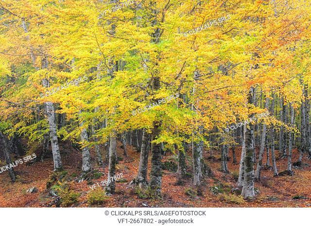 Sila National Park, Buturo, Catanzaro, Calabria, Italy
