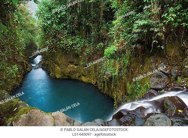 Equatorial forest. Bioko island. Equatorial Guinea
