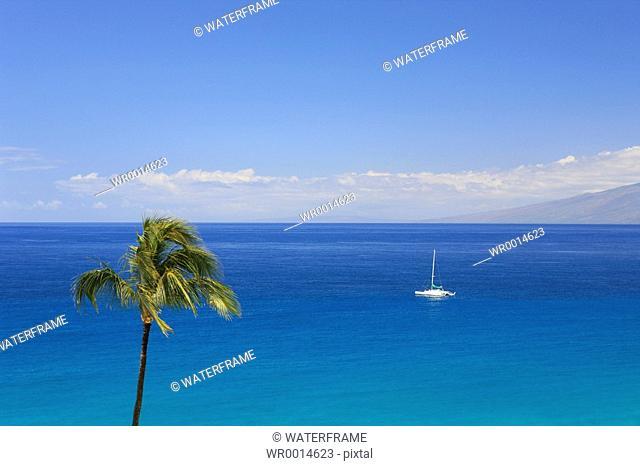 Palm-lined Beach on Hawaii, Maui, Pacific, Hawaii, USA