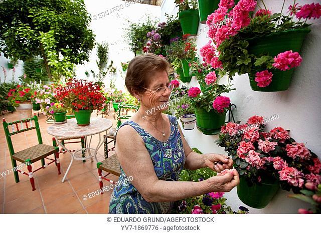 Typical patio of Medina Sidonia full of plant pots  Medina Sidonia, Cadiz, Spain, Europe