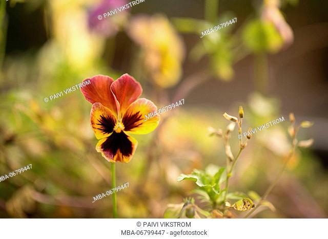 Violet Autumn Garden