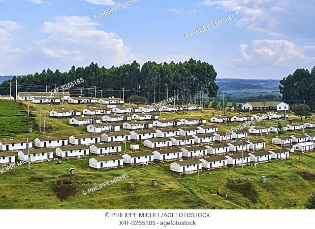 Kenya, Kericho county, Kericho, village des travailleurs du thé / Kenya, Kericho county, Kericho, tea picker village