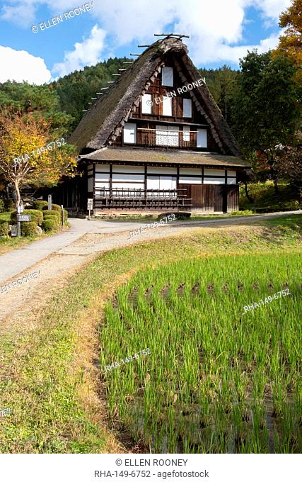 Nishiokas house, a traditional thatched building and a rice field at Hida Folk Village, Hida No Sato, Takayama, Honshu, Japan, Asia