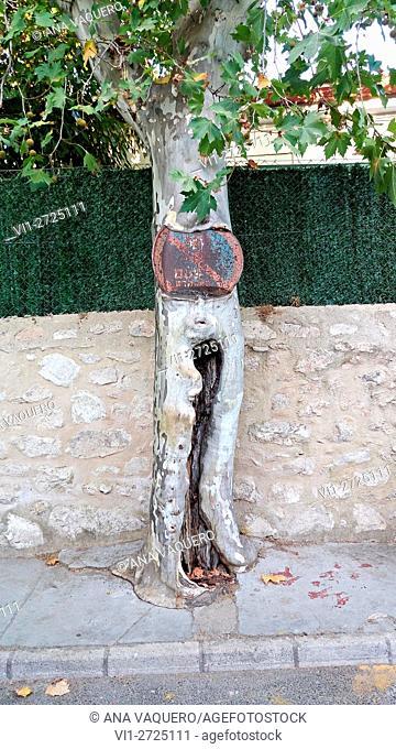 Nature regains its territory. Avenida de Trujillo, Cáceres, Spain