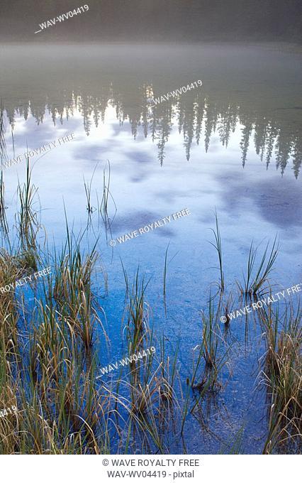 Details of shoreline of Whitegoat Lake, Kootenay Plains, Canadian Rockies, Alberta Canada