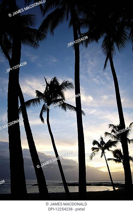 The sun sets over palm trees in Salt Pond Park on the Hawaiian Island of Kauai; Kauai, Hawaii, United States of America