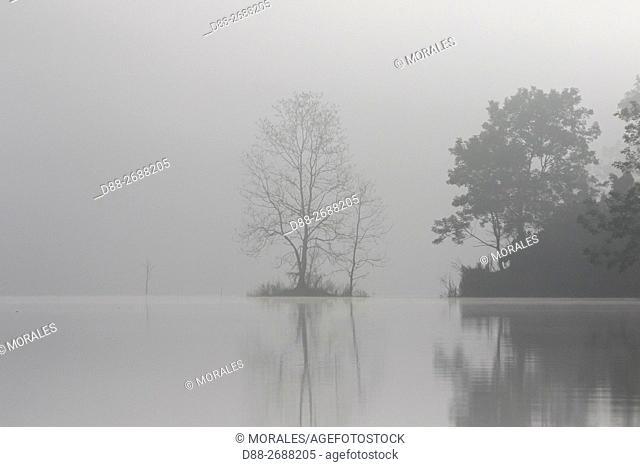 South east Asia, India,Tripura state,Bambur lake,tree in the mist