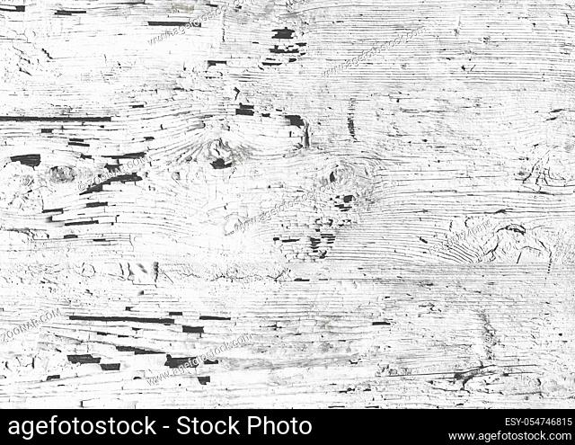 Cracked white paint on wood. Wooden wall with white paint is severely weathered and peeling