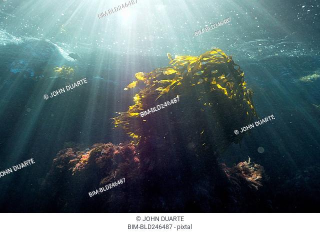 Sunbeams on fish swimming in ocean