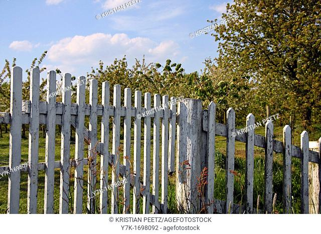 View of a white picked fence with trees in the background