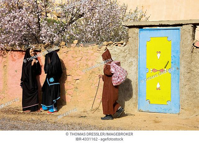 Chatting Berber women in front of a wall, Berber man passing by, blossoming almond trees (Prunus dulcis) behind, at the village of Adaï in the Ameln Valley